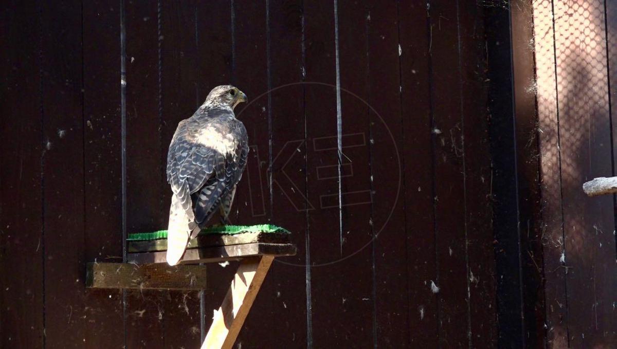 Videá s veľkými vtáky